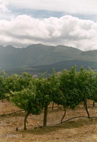wineland
