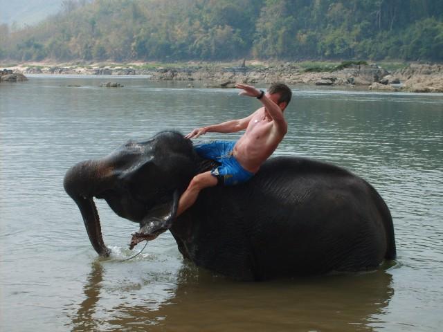 luang prabang olifant